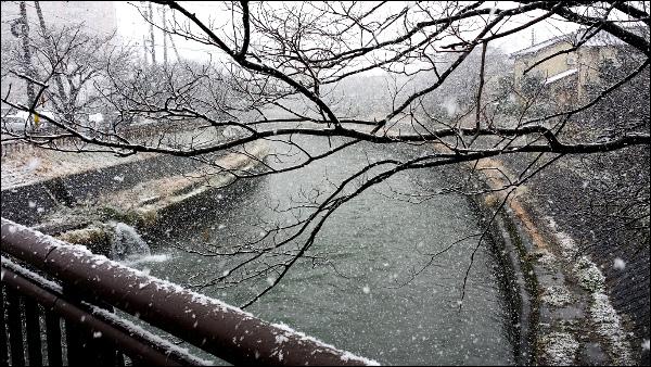 川沿いに舞う雪