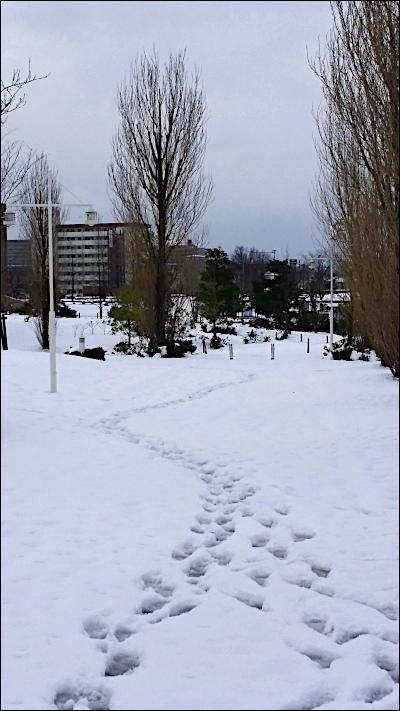 雪の積もった並木道