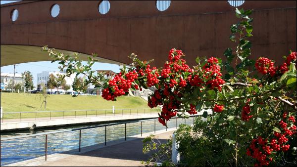 環水公園の赤い実を付けた樹木