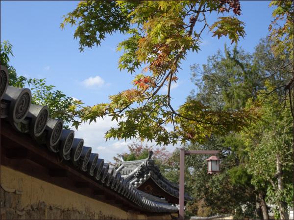 お寺にかかる枝、わずかに紅葉